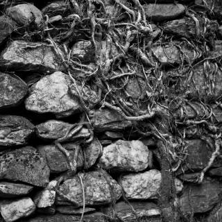 Stone Wall - Tarn, France 2008