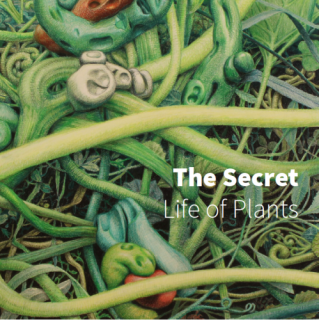 The Secret Life of Plants | 2017