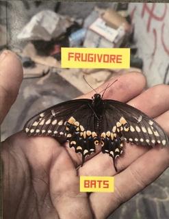 Eloy Arribas l Frugivore Bats