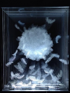 Nicolette Jelen, Ball of Feathers, 2014, Engraving on Plexiglass and Lightbox, 20 x 16 x 8 inches