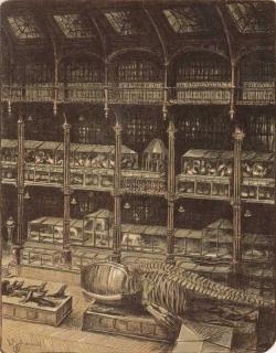 Jürg Kreienbühl La grande galerie avec squelette de baleine 1986 Muséum d'histoire naturelle lithograph lithographie