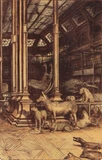 Jürg Kreienbühl Vue de la grande galerie avec antilope et guépards 1986 Muséum d'histoire naturelle lithograph lithographie