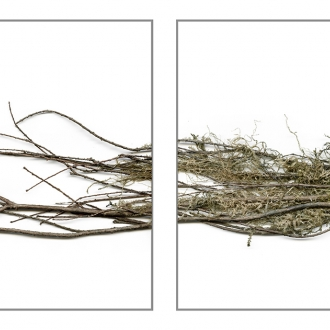 Opening Preview for Dawn Roe, Conditions for an Unfinished Work of Mourning: Wretched Yew, Friday, October 2, 6-8 pm