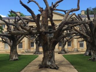 Ai Weiwei: Cubes and Trees