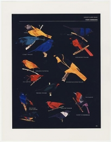 FRED TOMASELLI: Order Passeriformes (Black Version)