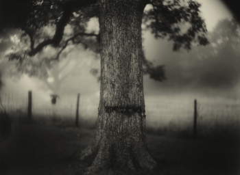 "Sally Mann's Retrospective: ""A Thousand Crossings"""