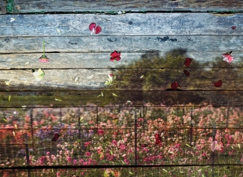 New flower photographs by Abelardo Morell in New York Magazine