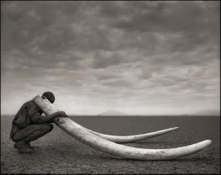 Nick Brandt on View at John Jay College