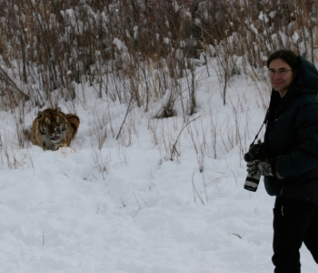 Khunta Mi Initiative: Saving the Amur Tiger