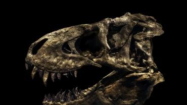 How to Photograph a Dinosaur