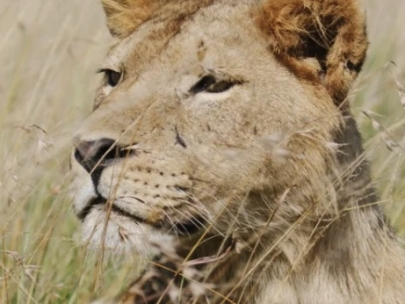 John Banovich & the Wildscapes Foundation: Travel
