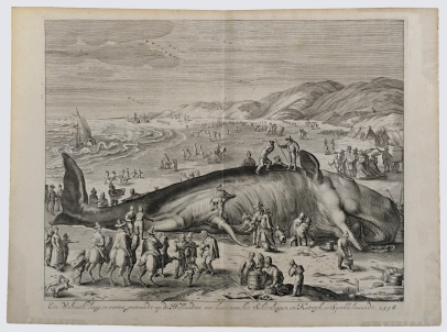 A Beached Whale Between Scheveningen and Katwijk