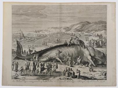 A Beached Whale Between Scheveningen and Katwijk