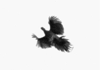 Nicolai Howalt | Dying Birds ; Bruce Silverstein Gallery