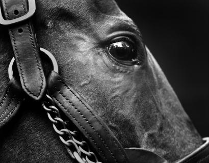 Horsetalk on Neil Latham