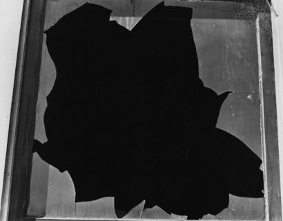 Teju Cole's New York Times essay on Brett Weston