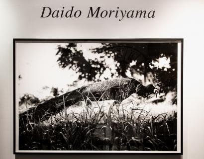 Hypebeast on Daido Moriyama