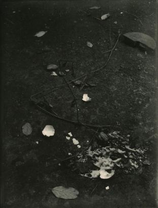 Josef Sudek - Untitled (Still life with Branches and Broken Egg), c. 1950-54 | Bruce Silverstein Gallery