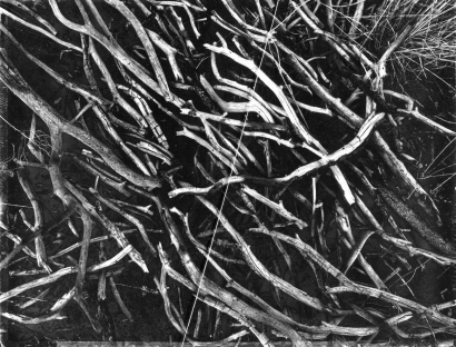 John Wood - Actual Line and Arranged Pinon Branches, 1967 Gelatin silver print with taut string mounted to board | Bruce Silverstein Gallery