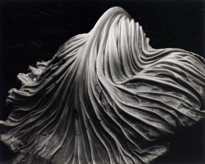 Edward Weston- Cabbage Leaf, 1931 Gelatin silver print mounted to board, printed c. 1951-52   Bruce Silverstein Gallery