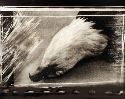John Wood - Bald Eagle Pelt, 1985 Gelatin silver print mounted to board, printed c. 1985 | Bruce Silverstein Gallery