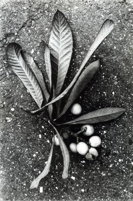 Daido Moriyama - Documentary 19, 1985 Gelatin silver print, printed c. 1985. 10 x 8 inches ; Bruce Silverstein Gallery
