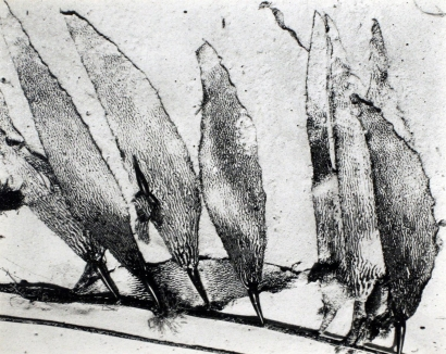 Edward Weston- Seaweed, Carmel Beach, 1930 Gelatin silver print mounted to board, printed c. 1951-52   Bruce Silverstein Gallery