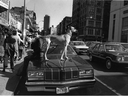 Dog on car by Len Speier
