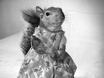Squirrel by Nina Leen