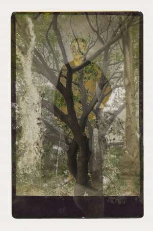 SARA ANGELUCCI | ARBORETUM (MAN/MAPLE) | IMPRESSION PIGMENTAIRE SUR PAPIER D'ARCHIVES | 34 X 24 POUCES | 2016