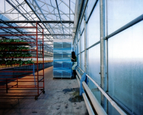 ÈVE K. TREMBLAY   GROWING MEDIUM (OASIS)   C-PRINT   40 X 50 INCHES   2005