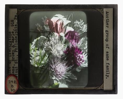 SARA ANGELUCCI | BLACK FLOWERS (SAME FAMILY) | IMPRESSION À JET D'ENCRE | 24 X 29 POUCES| 2018