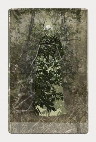 SARA ANGELUCCI   ARBORETUM (WOMAN/ASH)   PIGMENT PRINT ON ARCHIVAL PAPER  24 X 34 INCHES   2016