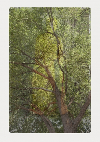 SARA ANGELUCCI | ARBORETUM (WOMAN/WILLOW) | IMPRESSION PIGMENTAIRE SUR PAPIER D'ARCHIVES | 44 X 31 POUCES | 2016