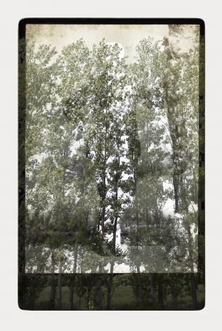 SARA ANGELUCCI   ARBORETUM (MAN/POPLAR)   PIGMENT PRINT ON ARCHIVAL PAPER   24 X 34 INCHES   2016