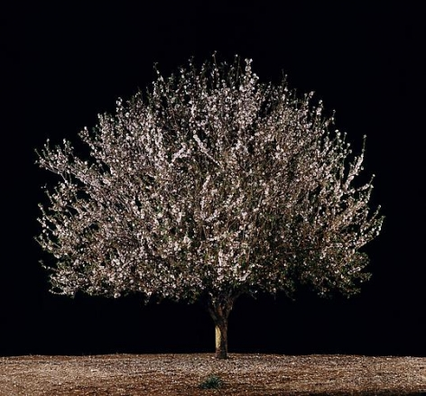 Shaked (Almond), 2011