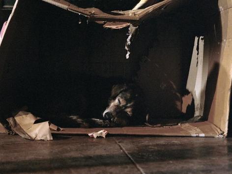 Charlotte Dumas, Scatola, 2008
