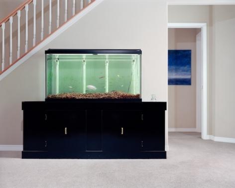 Angela Strassheim, Untitled (Fish Tank), 2005