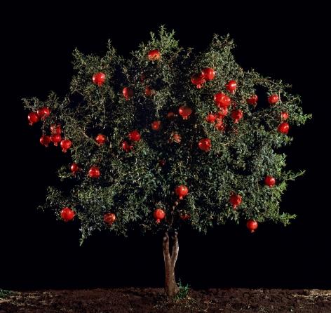 TAL SHOCHAT, Rimon (Pomegranate), 2011