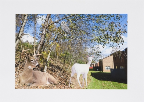 Deer at the Edge of the Woods, 2014, Collage on inkjet print