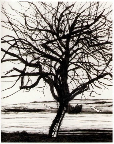 Vik Muniz, 200 Yards (The Apple Tree, After Atget), 1992, Gelatin silver print, 24 x 20 inches, Edition 5/5