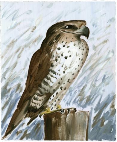 Ian Faden, Smirkey the Falcon (sm), 2019