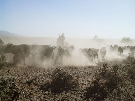 Lucas Foglia, Rowdy Moving Cattle between Pastures, 71 Ranch, Deeth, Nevada, 2012