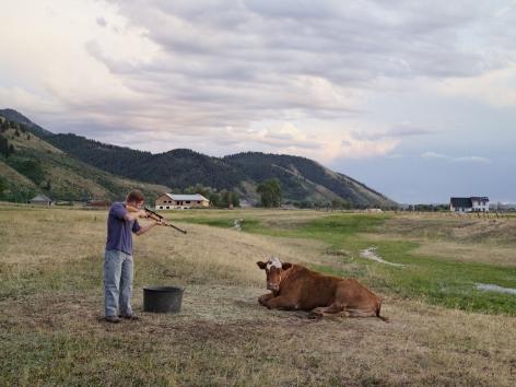 LUCAS FOGLIA, Adam Killing a Cow, Mortensen Family Farm, Afton, Wyoming, 2010