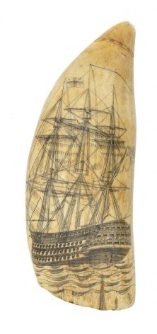 Scrimshaw tooth with detailed First-Rate Ship