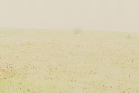 Perspicuum, 2013, chromogenic, 180 x 270 cm, Ed. /5