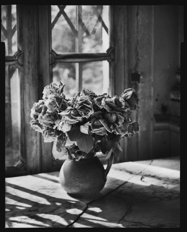 Mark Seliger- Flowers
