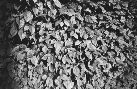 Andy Warhol - Leaves