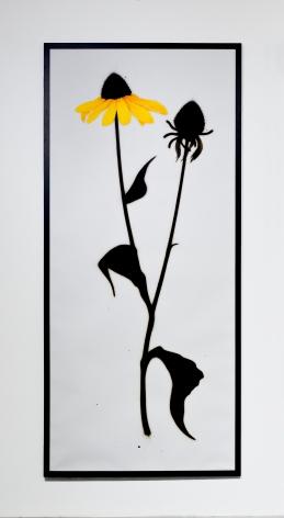 BRIAN BORRELLO, Cone Flowers, 2011