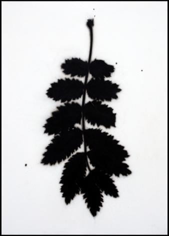 BRIAN BORRELLO, Leaf Drawing, 2010